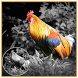 Color Effects Photo Editor by Furry Global Beauty Collage