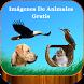 Imágenes De Animales Gratis by Marco Antonio Rubio