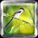 Master Cendet|Kicau Burung by Tone best app.Inc