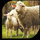 Raise Animal Farm