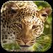 Leopard Wallpaper HD by Amazing Wallpaper & Themes
