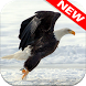 Eagle Wallpapers by Animal Wallpapers