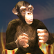 Apes Survival 3D by Digital Royal Gaming