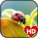 Lady Bug Wallpaper HD by Ash Tech Apps