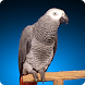 Grey Parrot Live Wallpaper by Wallpaper by Paul