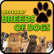 Different Breeds of Dogs by river studios