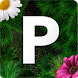 Pollen allergy warning Sweden by Groovy100
