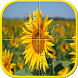 Flower Jigsaw Puzzles For Kids by adanan