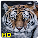 tiger wallpapers by Queru HD app