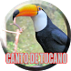 O Canto do Tucano by legend of bird