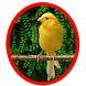 Master Kenari|kicau Burung Mp3 by Tone best app.Inc
