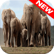 Elephant Wallpapers by Animal Wallpapers