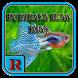 Budidaya Ikan Hias by Ruli Asad Aroma