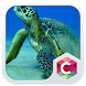 Sea Turtles CLauncher Theme by CG-Live-Wallpapers