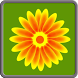 Learn To Draw Flowers by karolis.paulaitis@gmail.com