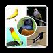 Kicau Burung Master by stream dev
