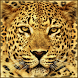 Gepard Live Wallpaper by Themes For Droid