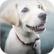 Cute Dogs Wallpapers by BuaStudio