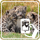 Photos of Baby Animals by Addictive Free Apps