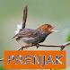 Master Kicau Prenjak by Onyx Gemstone