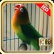 Ngekek Lovebird Paud Panjang by KicauKita
