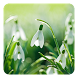 Spring Flowers Live Wallpaper by Live Wallpapers Ultra