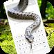Snake on Screen Scary Prank & Hissing Joke by Virtual Art 4Fun