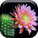 Cactus Flowers Live Wallpaper by XYZ Free Labs