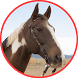 Horse Selfie Photo Frames by Free Apps Collection