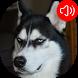 Talking Dog Sounds by RinradaDev