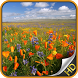 Flowers Wallpapers by SKU Solutions