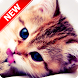 Kitten Wallpapers by Pinza