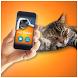 Kitten Teaser Simulator by Crazy Light Apps