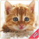 cute cat and kitten wallpapers by ISL