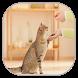 تربية و ترويض القطط - بدون انترنت by mom