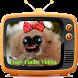Crazy Funny Videos Free by Fattan Dev