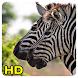 Zebra Wallpapers by Queru HD app