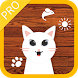 Cat Toys:rat & laser point Pro by M.T Player