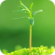 Spring Green Live Wallpaper by roseapps