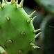 Cactus Puzzle by puzzlemeoy