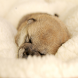 Shiba dog wallpaper by JLD International,inc