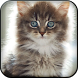 Fluffy Kitten Live Wallpaper by Zheka