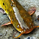 catfish wallpaper by Pretty and cute wallpapers llc