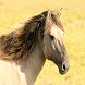 Animal Wallpapers HD Free