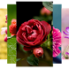 Flowers Wallpaper Slideshow by Baros