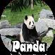 Panda Wallpaper by RayaAndro27