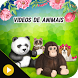 Videos de animais by Apps Frases e Amor