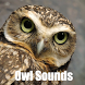 Owl Sounds by Scorpion King