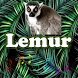 Best Lemur Sounds by MarcosMusic