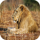 Wild Animal Sounds: For Kids by NeonatCore
